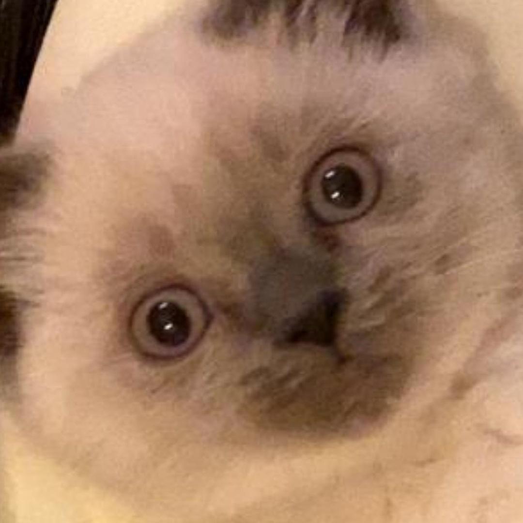 Claasic Cats TikTok avatar