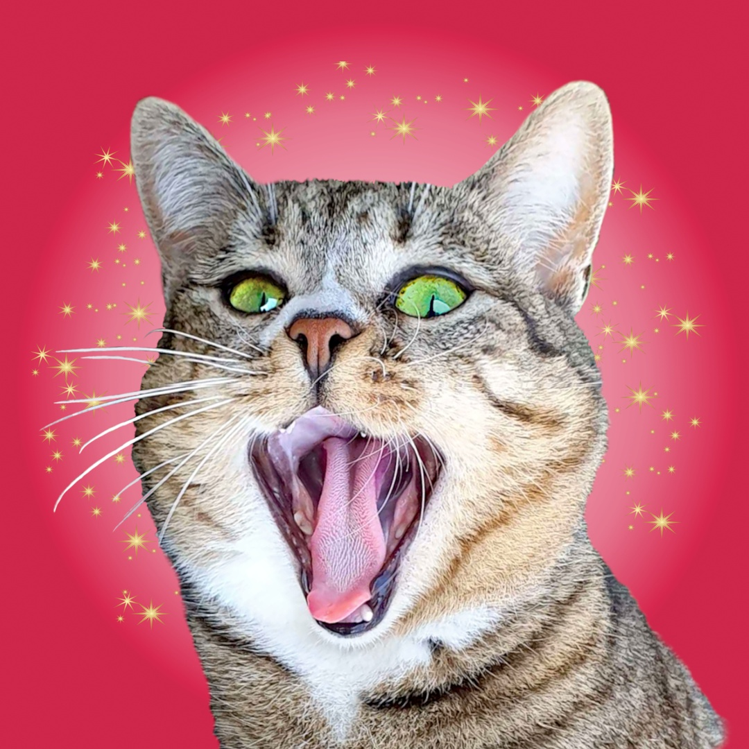 Bébé Crazycat 🙀 100% chat TikTok avatar