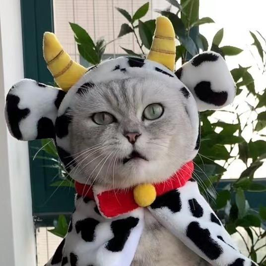 KittyGod TikTok avatar