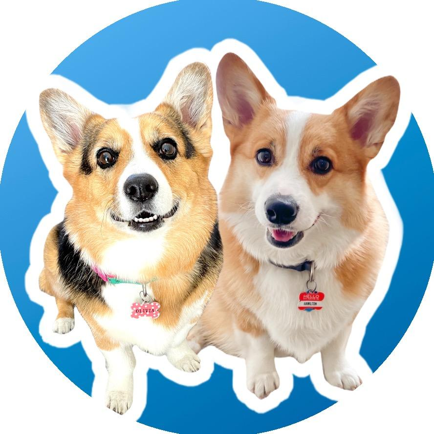 Hammy & Olivia Corgi TikTok avatar