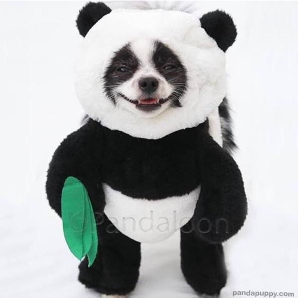Huxley the Panda Puppy🐼🐶(pandaloon TikTok avatar