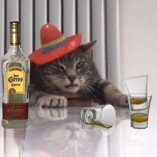 Life of Misty TikTok avatar